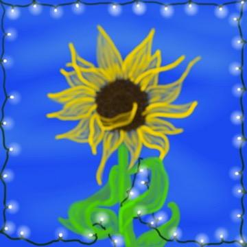 sunflower for peter
